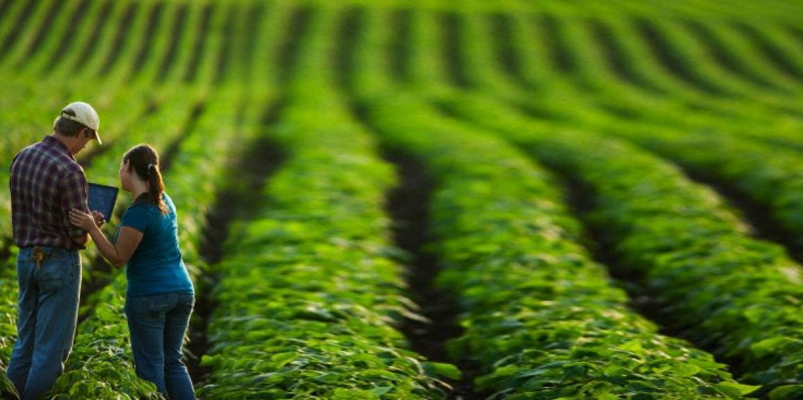 Tecnologia invade os campos agrícolas