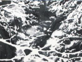 Tecido Estampado Rodrigo A3-EQ
